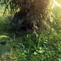 Poklad pod stromčekom