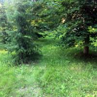 Škôlka mladých stromčekov
