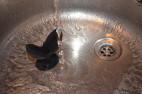 Análny kolík Gaper - vo vode